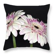Pink And White Gerbera 2 Throw Pillow