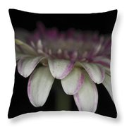 Pink And White Gerbera 3 Throw Pillow