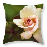 Pink And White Rose Throw Pillow