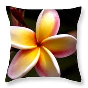 Pink And Yellow Plumeria Throw Pillow