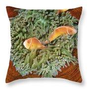Pink Anemonefish Trio Papua New Guinea Throw Pillow