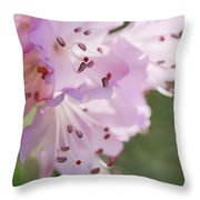 Pink Azalea Flowers In The Morning Light Throw Pillow