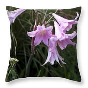Pink Belladonna Lily - Naked Lady - Belladonna Amaryllis  Throw Pillow