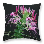Pink Bloom Squared Throw Pillow