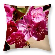Bee Flying Pink Blossoms 031015a Throw Pillow