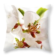 Pink Blossom Throw Pillow by Elena Elisseeva