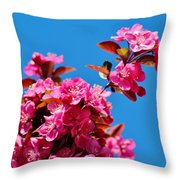 Pink Blossoms Blue Sky 031015a Throw Pillow