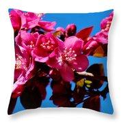 Pink Blossoms Closeup 031015a Throw Pillow