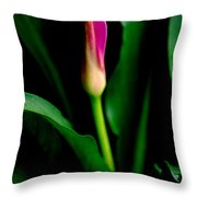 Pink Calla Lily Blossom Throw Pillow
