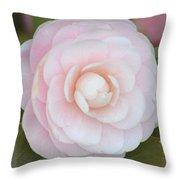 Pink Camelia Flower Throw Pillow