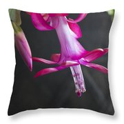 Pink Christmas Cactus Throw Pillow by Roger Snyder