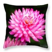 Pink Chrysanths Throw Pillow