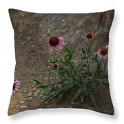 Pink Cone Flower's Close Up In A Road Throw Pillow