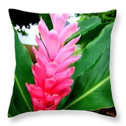 Pink Cone Ginger Throw Pillow