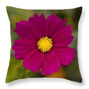 Pink Cosmos 3 Throw Pillow by Roger Snyder