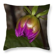 Pink Dahlia Bud Throw Pillow