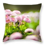 Bellis Perennis Pomponette Called Daisy Blooming  Throw Pillow