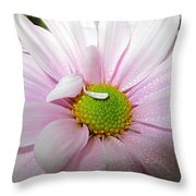 Pink Daisy Freshness With Water Droplets Throw Pillow