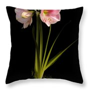 Pink Diamond Amaryllis Throw Pillow by Claudio Bacinello
