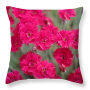 Pink Dianthus Flowers Throw Pillow