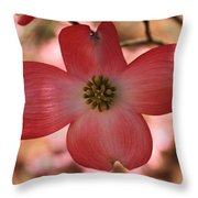 Crown Of Thorns Pink Dogwood At Easter 8 Throw Pillow
