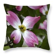 Pink Dogwood Blossom Up Close Throw Pillow