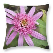 Pink Double Delight Echinacea Throw Pillow