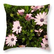 Pink Edge Throw Pillow