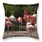 Pink Falmingos At The San Diego Zoo Throw Pillow