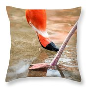Pink Flamingo At A Zoo In Spring Throw Pillow