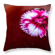 Pink Flower In Red Wine Cocktail Throw Pillow