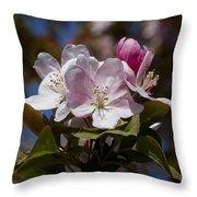 Pink Flowering Crabapple - Malus Throw Pillow