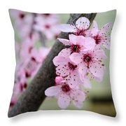 Pink Flowers On A Flowering Tree Throw Pillow