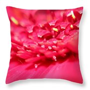 Pink Germini Daisy Throw Pillow