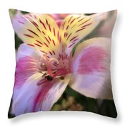 Pink Glow Lily  Throw Pillow
