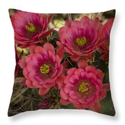 Pink Hedgehog Cactus Flowers  Throw Pillow