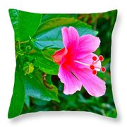 Pink Hibiscus Near Celadon Factory In Chiang Mai-thailand Throw Pillow