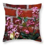 Pink Indian Hawthorne Throw Pillow