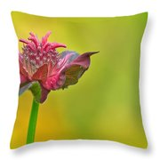 Pink Jester In Greene Throw Pillow