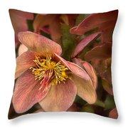 Pink Lenten Rose Throw Pillow