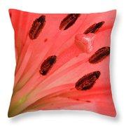Pink Lily Macro Throw Pillow by Adam Romanowicz