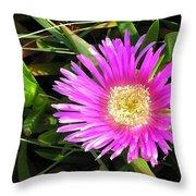 Pink Mesembryanthemum  Throw Pillow