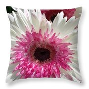 Pink N White Gerber Daisy Throw Pillow