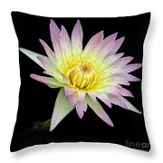 Pink N Yellow Water Lily Too Throw Pillow
