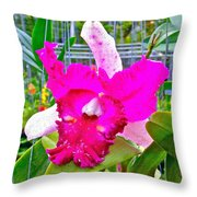 Pink Orchid At Maerim Orchid Farm In Chiang Mai-thailand Throw Pillow