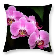 Pink Orchids In A Row Throw Pillow