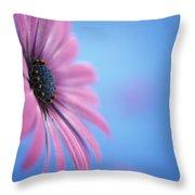 Pink Osteospermum Flower On Blue Throw Pillow