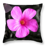 Pink Phlox Throw Pillow