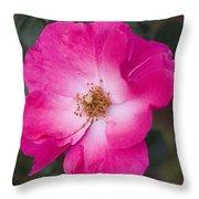 Pink Pink Throw Pillow