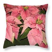 Pink Poinsettias Close-up Throw Pillow